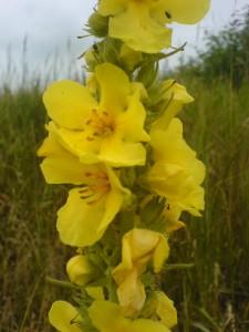 stalkaars bloem 1