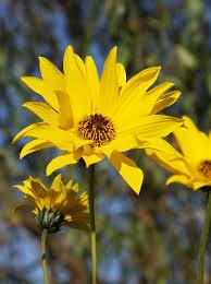 aardpeer-de-bloemen