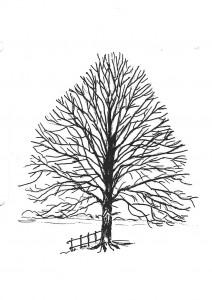 linde-tekening-paul-2-2