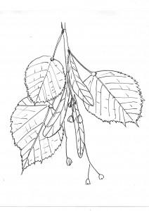 linde-tekening-paul-3-2