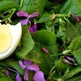 salade met maartse viooltjes en linde-blad