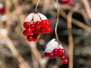 berries-656745_1280