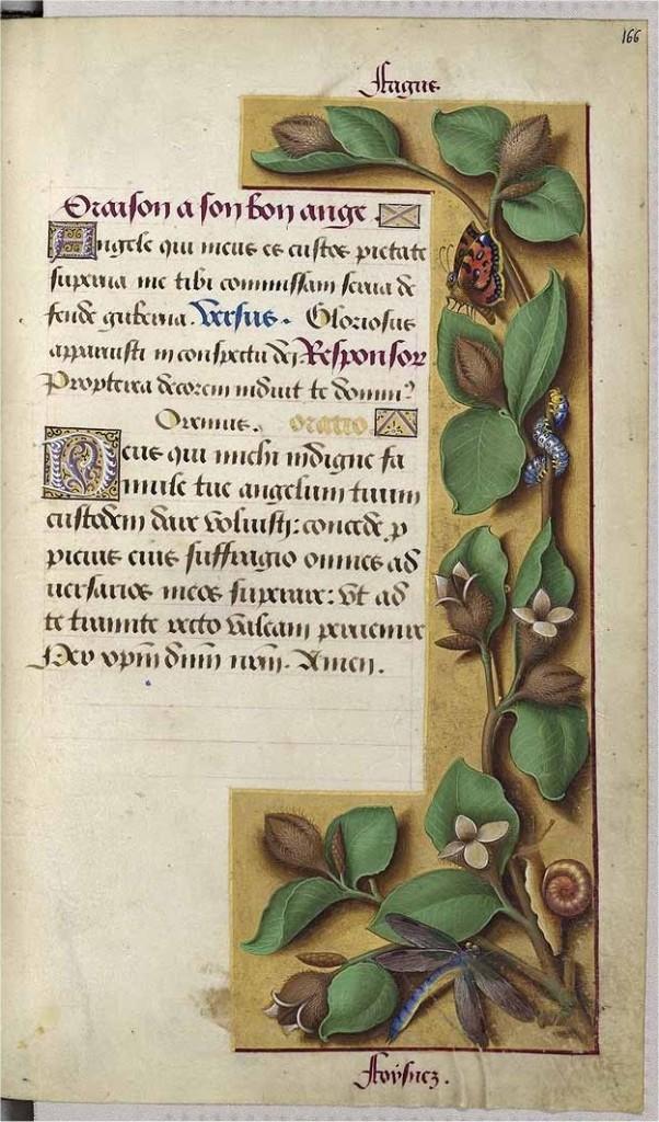 beuk-illustratie-middeleeuwen