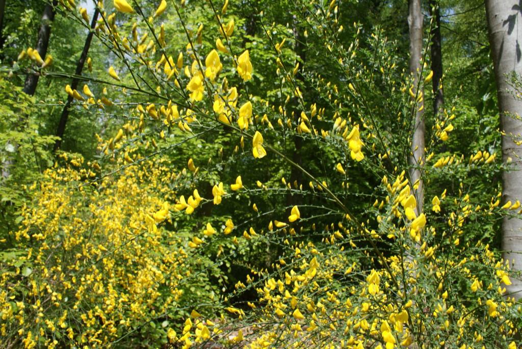 BREM pure gele zonnegloed