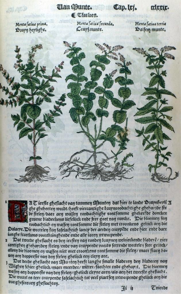 cruijdeboek-muntplanten