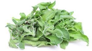 IJSKRUID een warmte minnende plant voor een ijselijk mooie salade