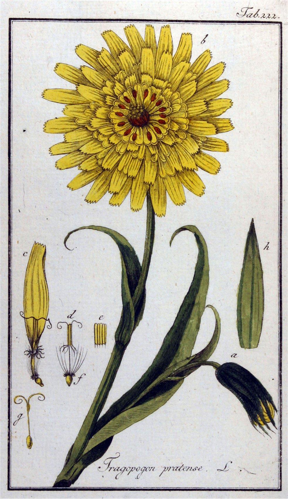 gele-morgenster-oude-prent