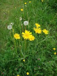 plant-gele-morgenster