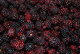 BRAAM niet alleen voor de heerlijke vruchten