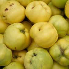 KWEE: geen appel, geen peer ...maar ALS JE WAT RUIMTE HEBT, ZOU JE KWEE MOETEN PLANTEN