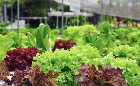 Wat is duurzaam voedsel?    Een zoektocht, deel 1